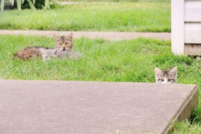 Коты в укрытиях