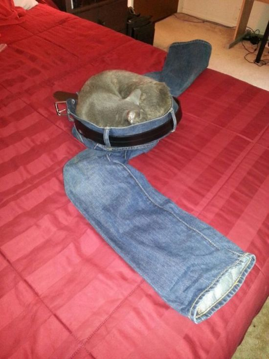 Смешное и странное поведение кошек