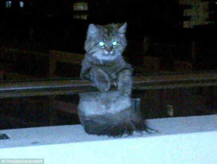 Забавные независимые кошки заряжают позитивом
