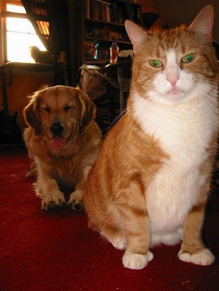 Коты фотобомбят собак