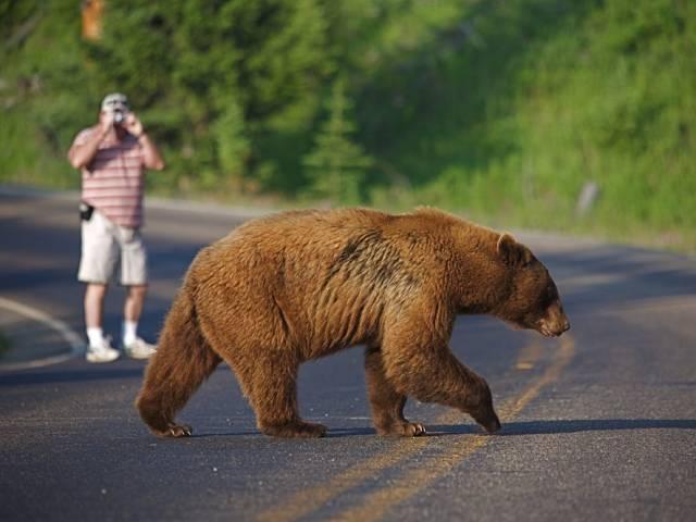 Что вытворяли люди в национальных парках США