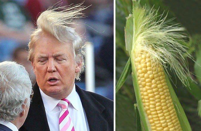 Забавные сходства и совпадения на фото