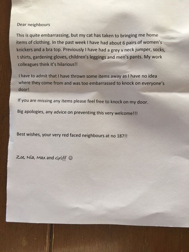 Женщине пришлось извиняться перед соседями за кошку, которая ворует их белье