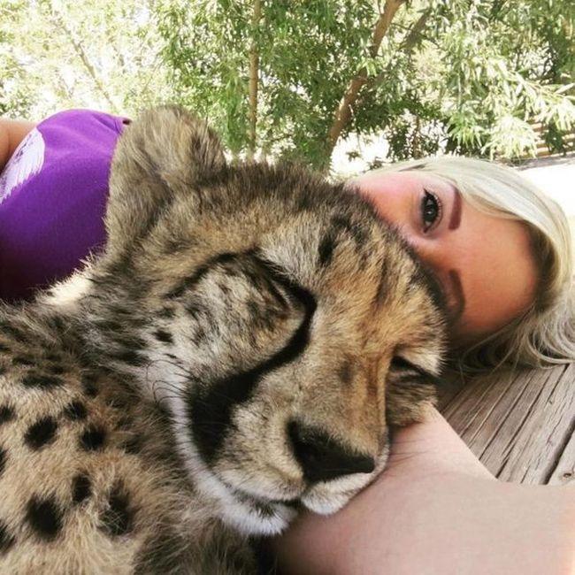 Британка спасла котенка гепарда от охотников за трофеями