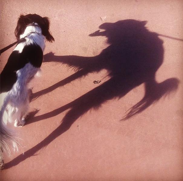Когда тень живет своей жизнью