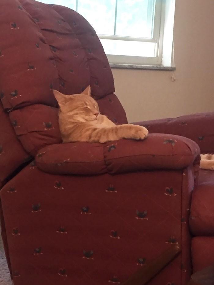 Смешные коты, которые отказываются вести себя как нормальные животные