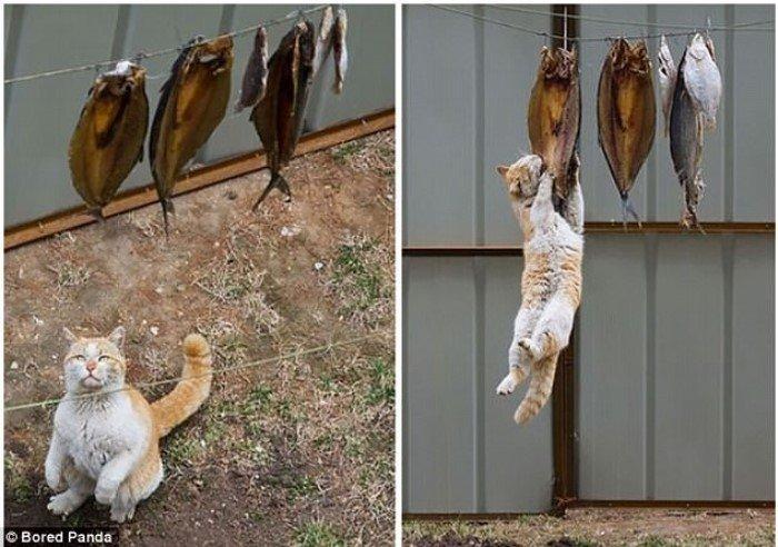 Кошки-воришки, которые были пойманы с поличным