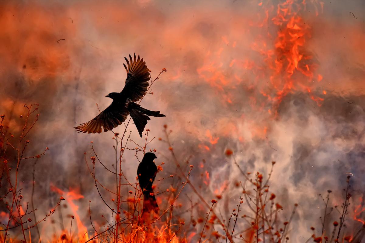 Победители фотоконкурса BigPicture Natural World Photography 2017