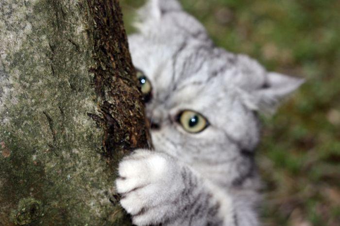 Толстая кошка Джули стала звездой интернета