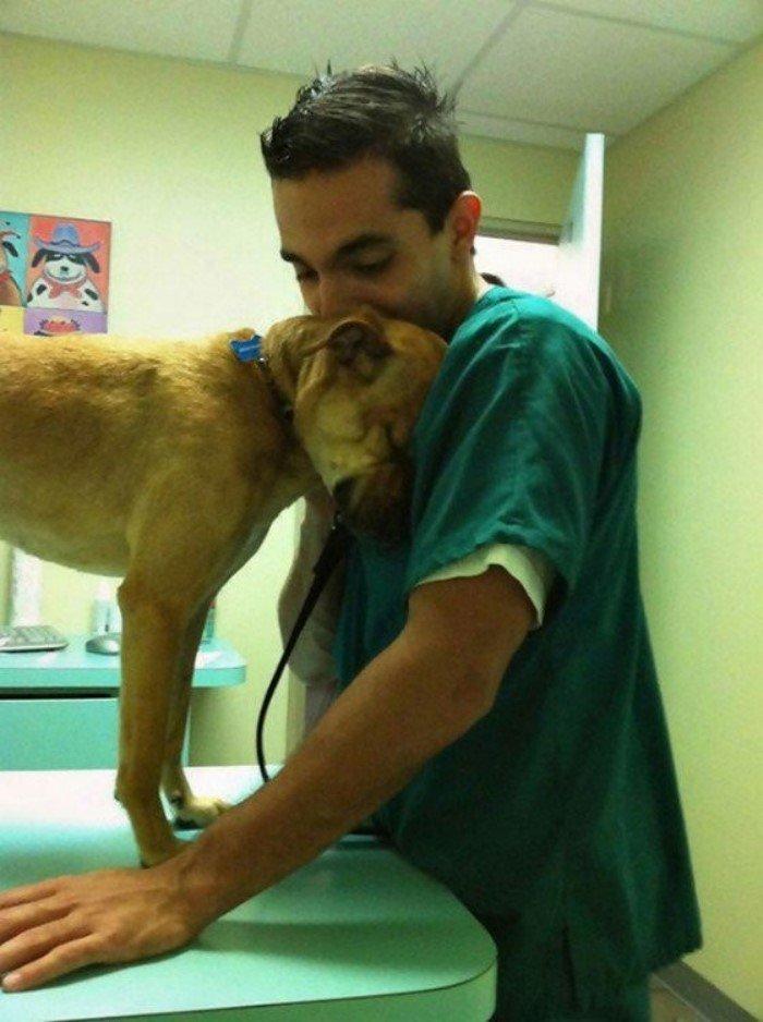20 замечательных фотографий из будней ветеринаров