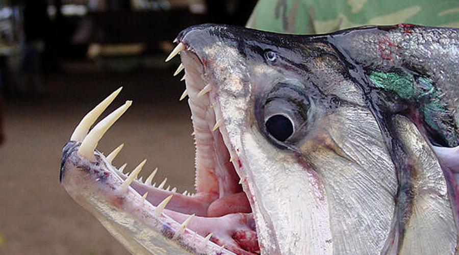 Ужасающие пасти разных животных