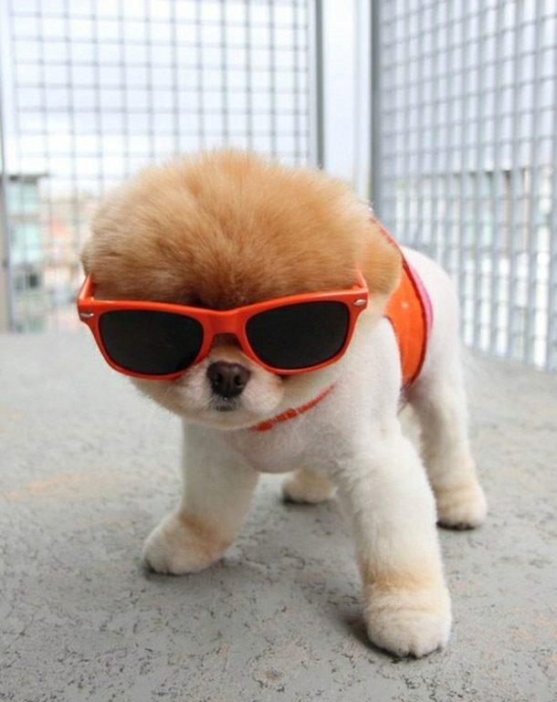 Забавные и милые щенята заряжают позитивом