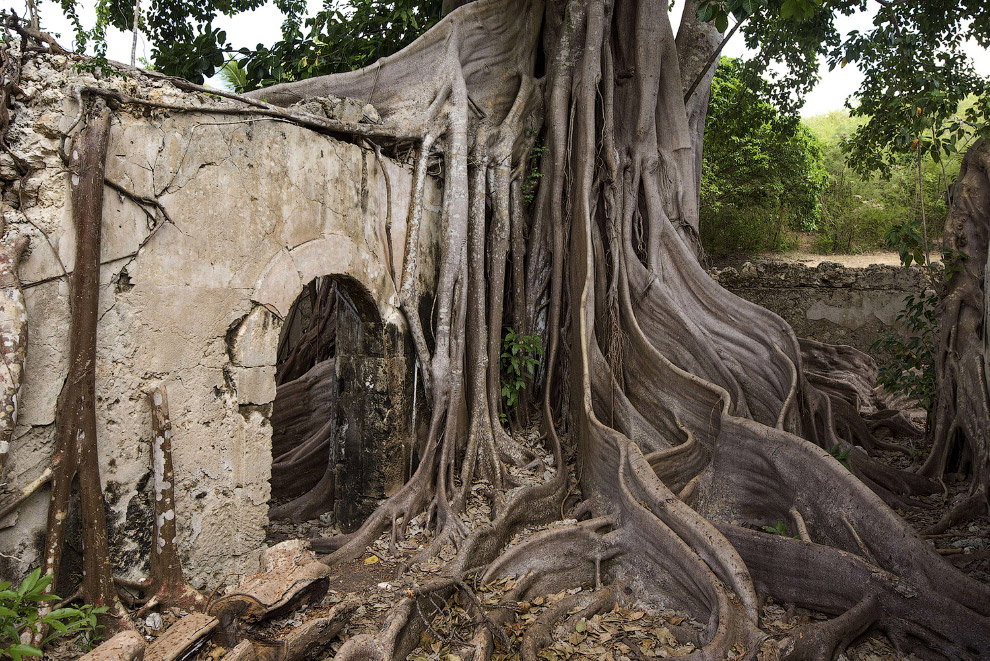 Деревья из разных уголков планеты