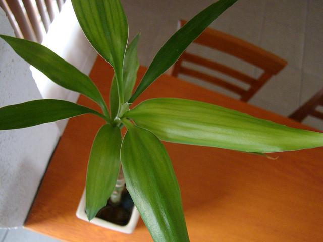 Energetically strong indoor plants