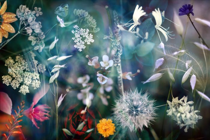 Макроснимки природы, словно сюрреалистические картины