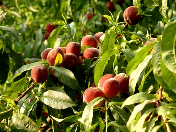 Любимый фрукт человека может многое рассказать о его характере