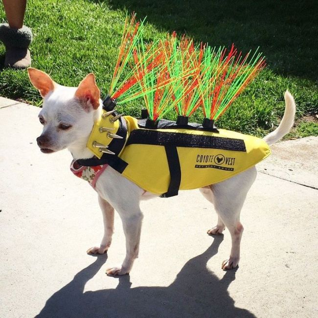 Защитные жилеты для собак
