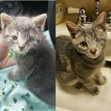 Котята подросли: тогда и сейчас