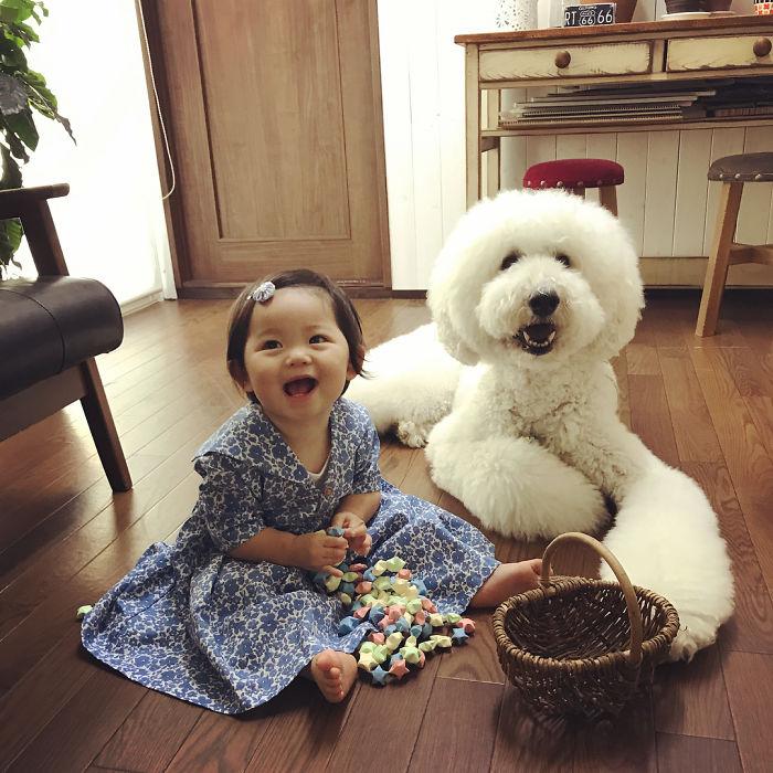 Маленькая японская девочка и ее пудель