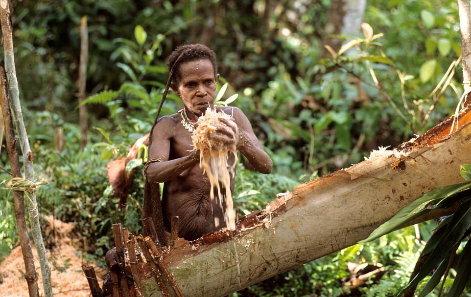 Племя Короваи в Индонезии