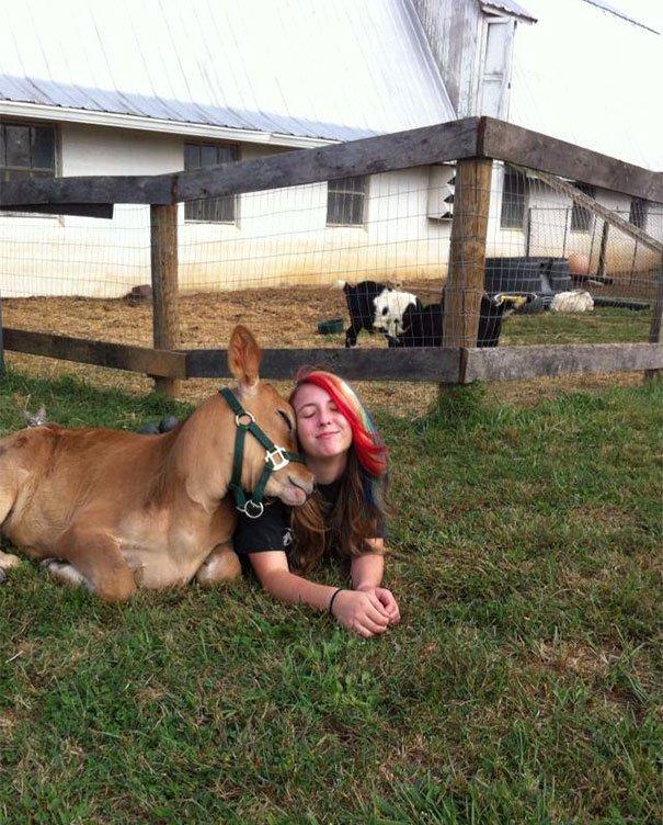 Коровы — это просто большие собаки