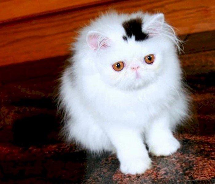 Коты с необычным окрасом