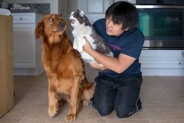 Непростые отношения между кошками и собаками