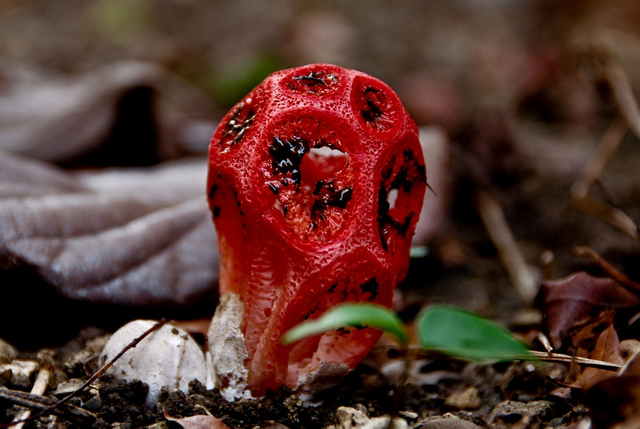 Жуткие растения из ночных кошмаров, которые существуют на самом деле