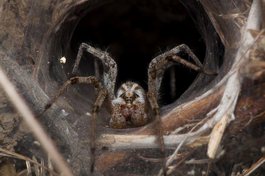 10 самых отвратительных паукообразных в мире