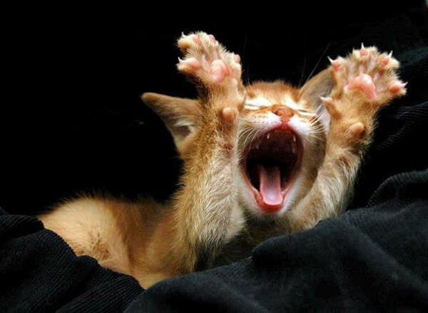 Очаровательные зевающие животные
