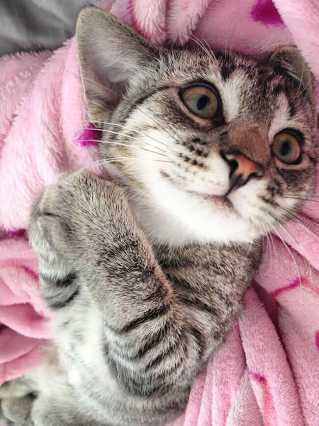 Милые котики улыбаются
