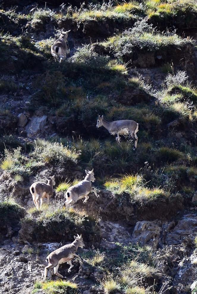 Жизнь животных и растений на фотографиях