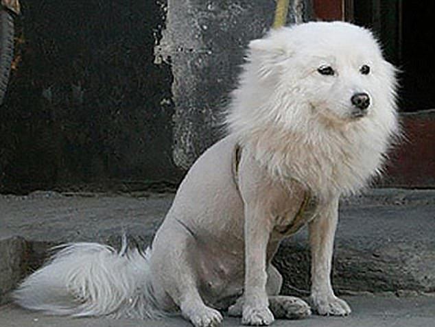 Идиотские стрижки домашних животных