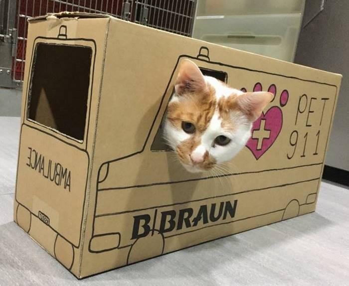 Ветеринары создают невероятные картонные домики для своего кота