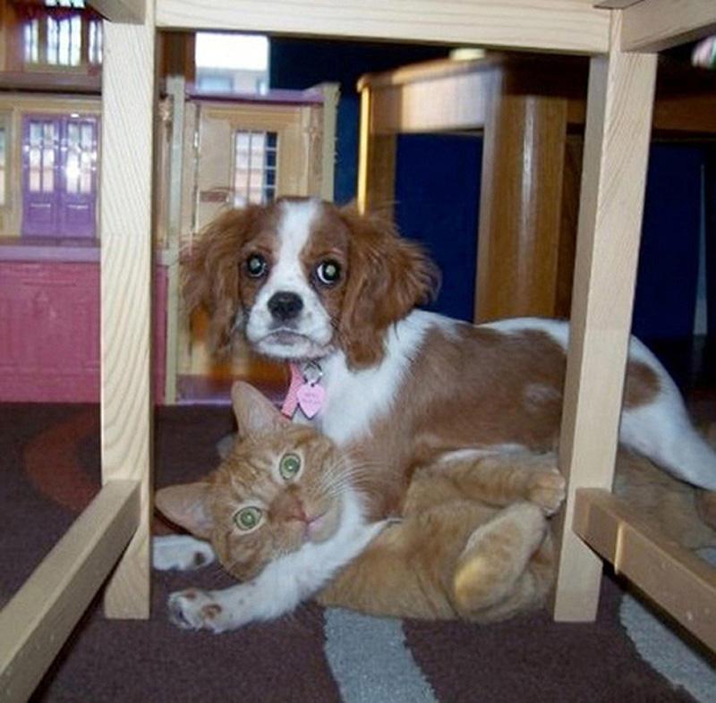 Собаки показывают кто в доме хозяин