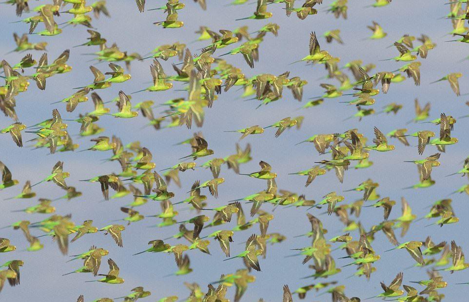 10 000 попугайчиков на водопое