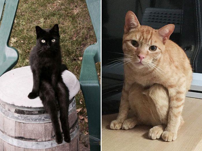 Коты, которые научились сидеть по-человечески
