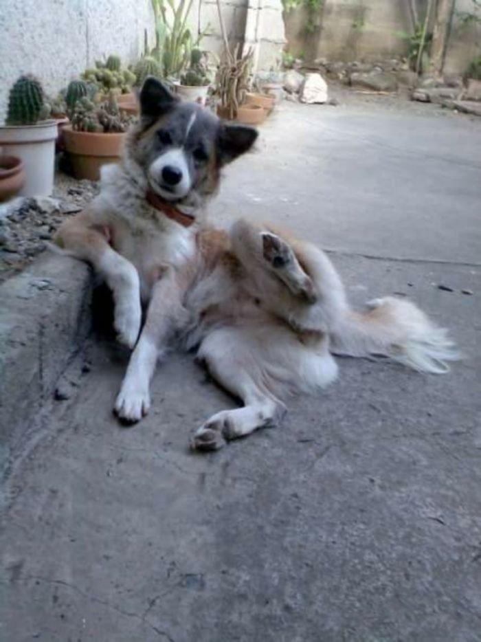 Забавные собаки, которые ведут себя как люди