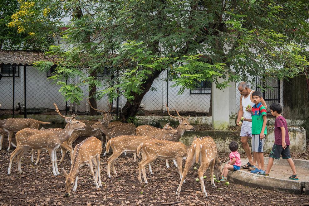 У семейной пары из Индии живет 100 питомцев