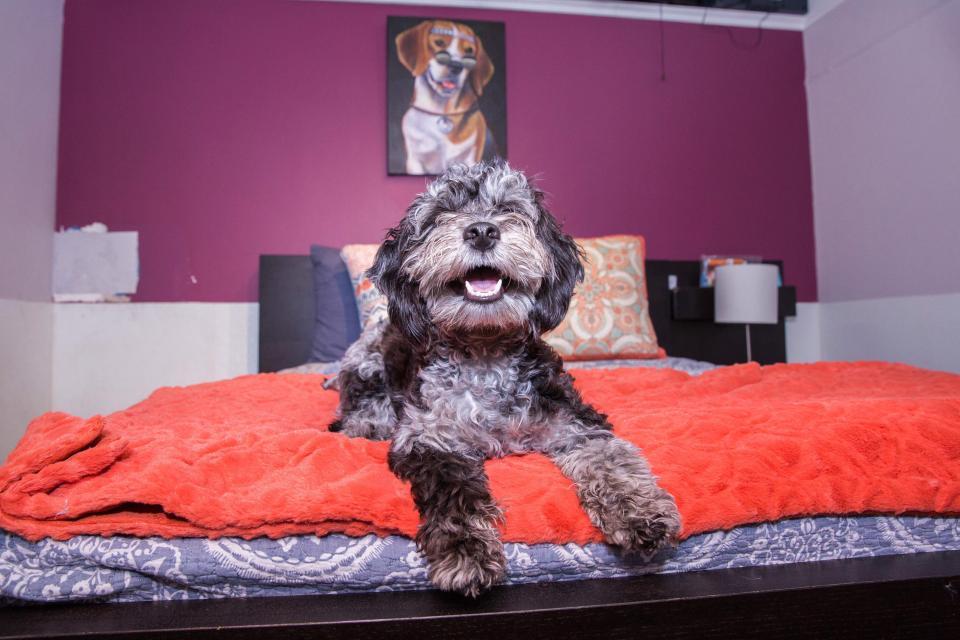 Роскошный отель для собак в Нью-Йорке