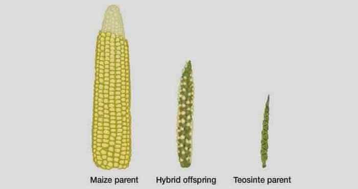Овощи и фрукты, которые были изменены до неузнаваемости