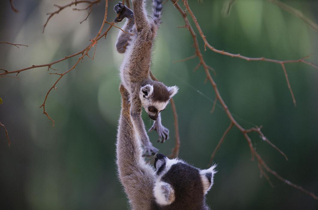 Максимально милые детеныши животных