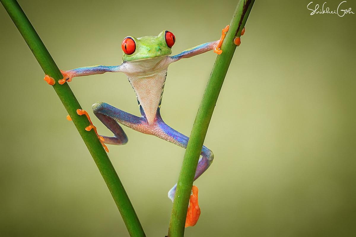 Замечательные макроснимки от Shikhei Goh