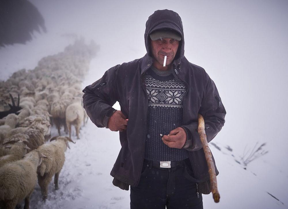 Зимняя миграция овец в горах Грузии
