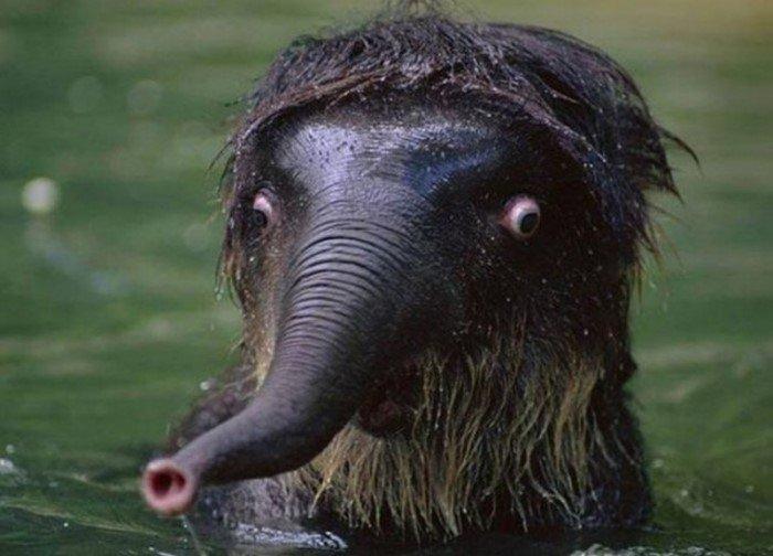 Снимки животных, которым недостает фотогеничности