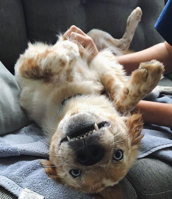 Преображение собаки из приюта