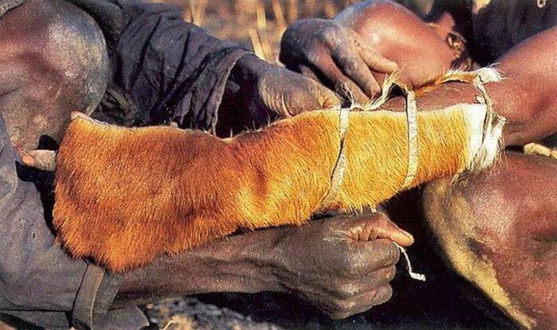 Как ловят питонов в Африке