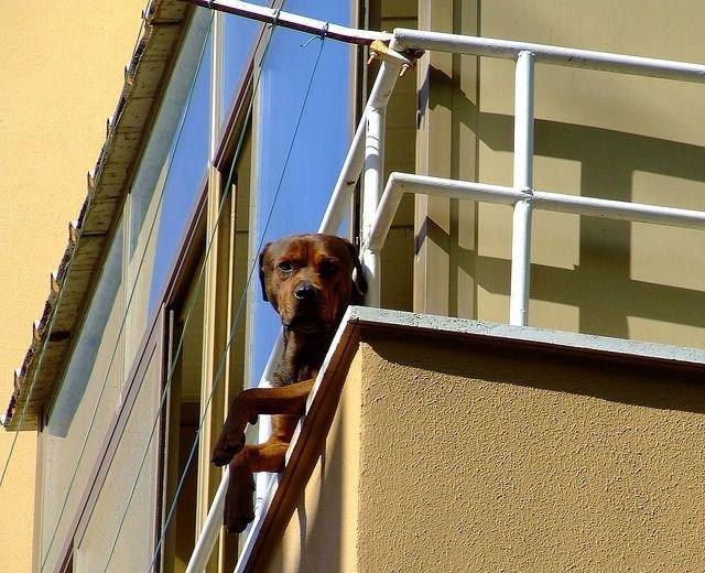 Животные, которые за нами наблюдают