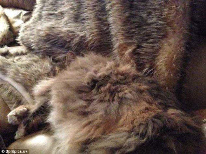 27 котов, которые умеют отлично маскироваться
