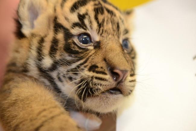 Детские фотографии самых свирепых хищников планеты